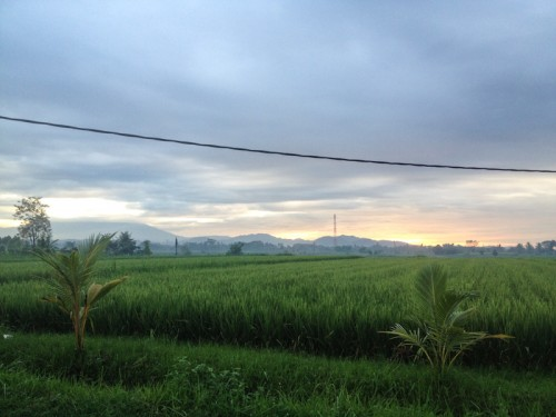 Sunrise over the paddy fields.